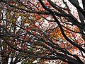 Autumn Colors, Centennial Park Sydney Australia (3613606566).jpg