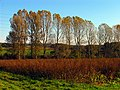 Autumn Fields near Frilsham - geograph.org.uk - 71187.jpg