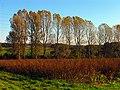 Autumn Fields near Frilsham - geograph.org.uk - 71187.jpg