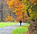 Autumn Foliage in Natirar, New Jersey File 6.jpg