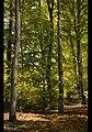 Autumn at Castle Drogo (5118789310).jpg