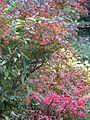 Autumn colour - Flickr - peganum.jpg