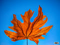Autumn leaf sky creative svln svln4821 photo resim sekilleri.JPG