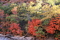 Autumn on the East Side (6255322074).jpg