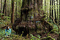 Avatar Grove Tagged Giant.jpg