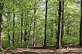 Axeltorps skogar 2020-1.jpg