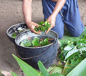 Ayahuasca being prepared in the Napo region of...