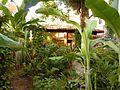 Back garden in casa particular CASA VERANO AZUL in Miramar, Havana..JPG