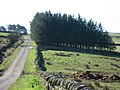 Back road to Sinderhope - geograph.org.uk - 389218.jpg