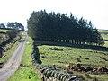 Back road to Sinderhope - geograph.org.uk - 389218.jpg