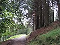 Back to Linch Clough - geograph.org.uk - 1526480.jpg
