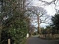 Bacon Lane - geograph.org.uk - 710115.jpg