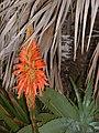 Balboa Island Botanical.JPG