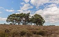 Balloërveld, natuurgebied in Drenthe 014.jpg
