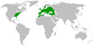 Ballota nigra - Image: Ballota nigra rangemap