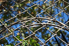 Barbed tape behind a chain link fence.jpg