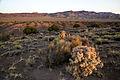 Basin and Range National Monument (21423705929).jpg