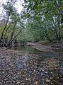 Bear Creek (29838398064).jpg