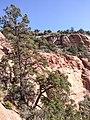 Bear Mountain, Sedona, Arizona - panoramio (49).jpg