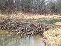 Beaver Dam - panoramio.jpg