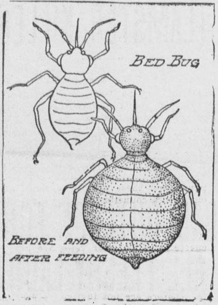 File:Bedbugs (1904 sketch).jpg