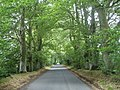 Beech lined road on Cranborne Chase - geograph.org.uk - 223328.jpg