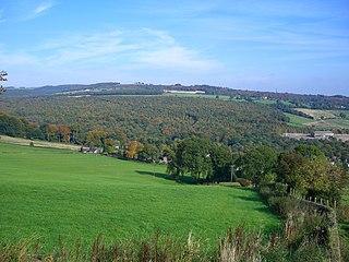 Beeley Wood