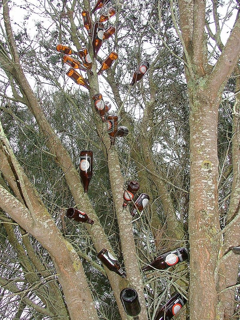 Beer bottle tree, Victoria, Australia.jpg