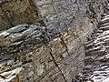 Bentonite (105.6 Ma) in the Dakota Sandstone (Lower Cretaceous) (Dinosaur Ridge, Colorado, USA) 10 (22196790292).jpg