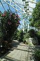 Bergianska trädgården-IMG 3388.jpg