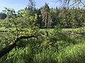 Biberreich am Rotenbach bei Ellwangen.jpg