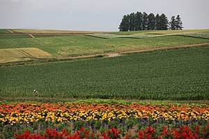 Biei, Hokkaido - Image: Biei Hokkaido