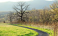 Big Oak Trail Oak (7018891875).jpg