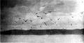 Bird-Lore-6-1 0023.png