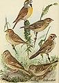 Bird lore (1911) (14568785347).jpg