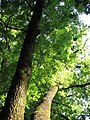 Bistrita - Parcul Central (818592865).jpg