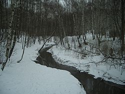 Bitsa River in Yasenevo Forest Park.jpg