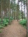 Blackheath Common - geograph.org.uk - 186031.jpg