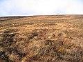 Bleak moorland - geograph.org.uk - 290455.jpg