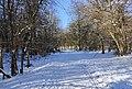 Bois Bourgeois 20210213.jpg