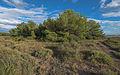 Bois des Aresquiers, Vic-la-Gardiole, Hérault 07.jpg