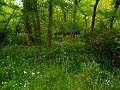 Bois du haut de Chalou, Les Rairies.jpg