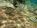 Bonaire M0010449 (2085277152).jpg