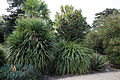 Border shrubs Beale Arboretum - West Lodge Park - Hadley Wood - Enfield London.jpg