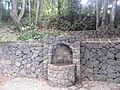 Bosque del Adelantado 7.JPG