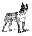 Boston Terrier (PSF).png