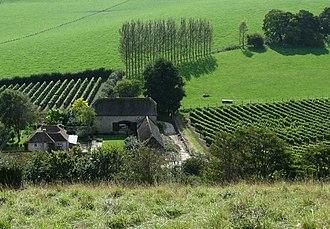 English sparkling wine - Breaky Bottom Vineyard near Lewes, a producer of English sparkling wine