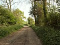 Bridleway and road to Butler's Hall Farm - geograph.org.uk - 420108.jpg