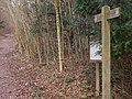 Bridleway enters West Dean Woods - geograph.org.uk - 1747657.jpg