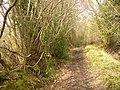 Bridleway from Wyphurst Home Farm - geograph.org.uk - 1775073.jpg